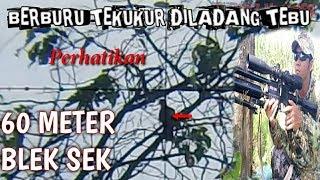 Download BERBURU TEKUKUR DI LADANG TEBU HIT 60METER Video