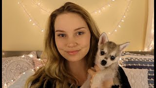 Download ASMR Arya ♥ Puppy Love and Petting Video