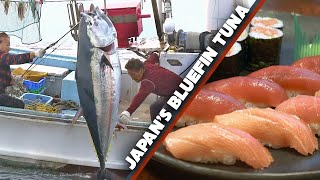 Download Bluefin Tuna (Maguro) Story | Sea to Sushi Shop ★ ONLY in JAPAN Video
