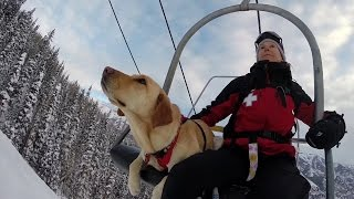 Download GoPro Awards: Telluride Avalanche Dogs Video