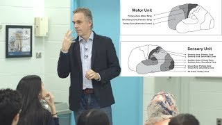 Download Jordan Peterson - What is consciousness & how does it relate to the brain? Video