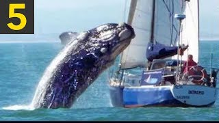 Download Top 5 Whale VS Boat Videos Video