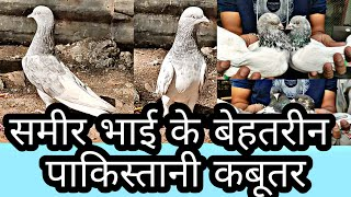 Download Sameer Bhai Ke Shaandar Pakistani Kabutar Video