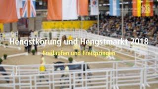 Download Hannoveraner Hengstkörung 2018 - Freilaufen und Freispringen Video