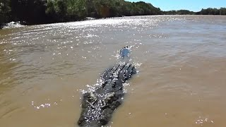 Download Warning Scary video, Biggest Saltwater Crocodile I have ever seen, NT Australian Wildlife Video
