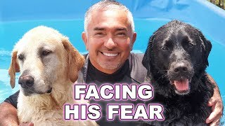Download Cesar Millan Helped My Guide Dog Overcome His Fear Video