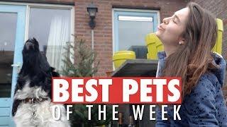 Download Best Pets of the Week | August 2018 Week 2 Video