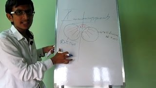 Download Immunosuppresants Part 1 Video