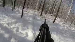 Download Охота на лося. Лось на лежке. Hunting elk. Video