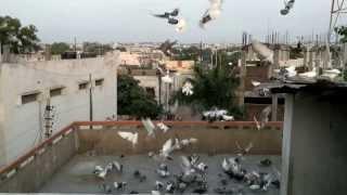 Download GOPI Bhai Ka Kabootar Hyderabad -01 (02NOV13) Video