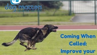 Download Coming When Called: How to Improve Your Dog's Recall Video