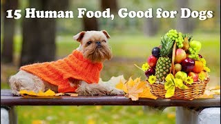 Download 15 human foods good for Dogs Video