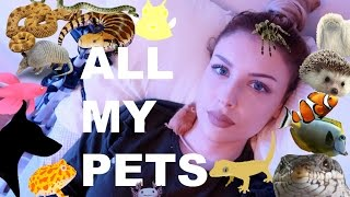 Download ALL OF MY PETS IN ONE VIDEO (I know, I have a lot) Video