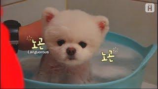 Download 강아지 인형~ 두부씨 목욕할 시간이에요~♥ Video