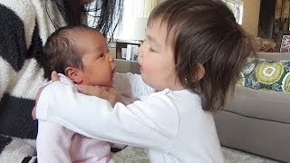 Download YOU MUST WATCH THIS!!! - April 14, 2014 - itsJudysLife Daily Vlog Video