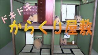 Download ハムスター専用からくり屋敷(Ninja mansion ) Video