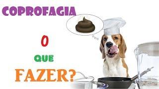 Download Coprofagia: meu cão come as fezes, o que fazer? - Veterinária explica Video