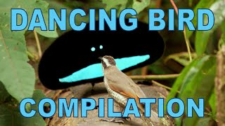 Download Weird & Wonderful Dancing Birds Compilation (Part 1) Video