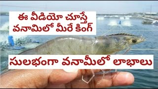 Download how to do vannamei prawn culture in telugu Video