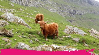 Download Top Places to See in the Faroe Islands Video