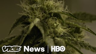 Download Will California Weed Growers Survive Legal Marijuana? (HBO) Video