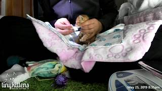 Download SURPRISE: Intakes with baby kittens from Stanley's feral colony! TinyKittens Video