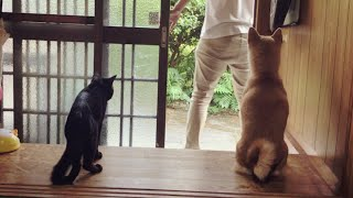 Download お出かけ時の犬と猫の反応が違いすぎて可愛い Dog and Cat reaction: where do you go? Video