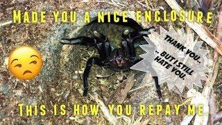 Download DIY tarantula habitat ~ NO MORE COLLAPSING BURROWS !!! [Experiment] Video