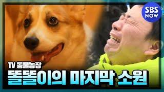 Download SBS [동물농장] - 강원래&김송 부부와 똘똘이의 마지막 소원 Video