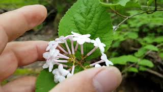 Download 산야초 공부 -)공부는 이렇게00027,고산지대 약초,나물,식물들. Video