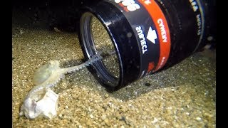Download Baby Octopus Discovers Camera Video
