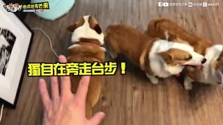 Download [連環泡]三寶與小姊姊的孕婦棚拍記 Video