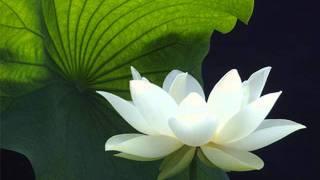 Download Namo Tassa Bagawato Arahato Samma Sam Buddha Sa Video