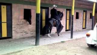 Download caballos para la venta Video