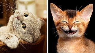 Download 10 Razze di gatti più pericolose del mondo Video