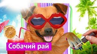 Download Город, удобный для собак Video