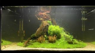 Download Aquascape Tutorial ″Nature's Chaos″ by James Findley - The Making Of Video