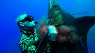 Download Spearfishing Blue Marlin in Hawaii - Bluewater Hunting Video