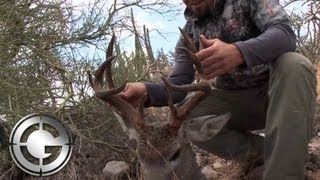 Download Giant Coues Deer in Mexico Video