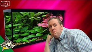 Download Where to buy Beginner Plants For Aquariums Video
