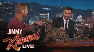 Download Wild Animals with Dave Salmoni Video