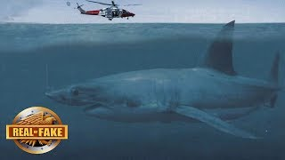 Download LIVE MEGALODON ON CAMERA BRAZIL - real or fake? Video