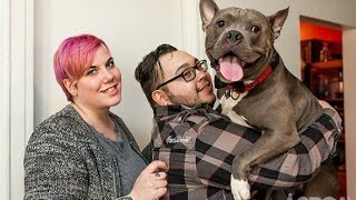 Download Pitbull Rescued by ASPCA Finds Loving Home Video