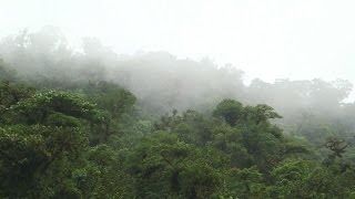 Download Costa Rica advances the global conversation on planet conservation Video