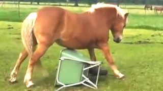 Download Funny Horse Videos Compilation 2014 [NEW] Video