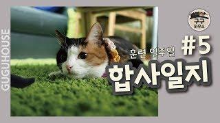 Download 고양이 합사 훈련 일지 #5/고양이를 부탁해 솔루션 [구구하우스] Video