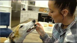 Download My Greyhound Tries Fruits And Vegetables Video