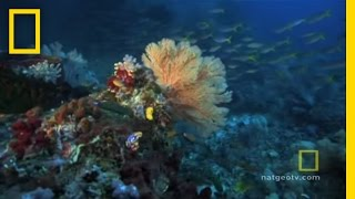Download Great Barrier Reef | Exploring Oceans Video