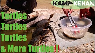 Download The Turtles of North America at Garden State Tortoise! Video