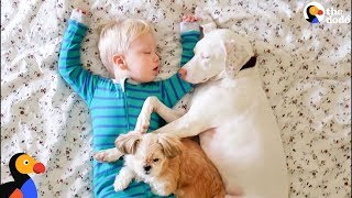 Download Rescue Dog And Her Little Boy Keep Each Other Safe | The Dodo Video